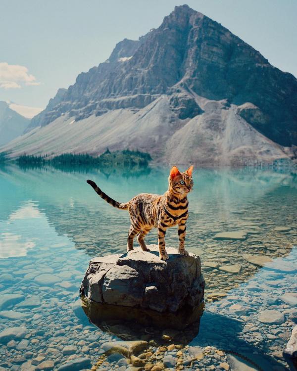 Las aventuras de Suki, un gato aventurero