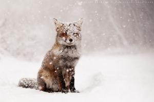 19 preciosas fotografías de animales en invierno