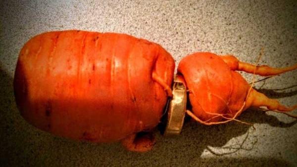 Un anciano encuentra su anillo de boda perdido atrapado en una zanahoria cosechada en su jardín