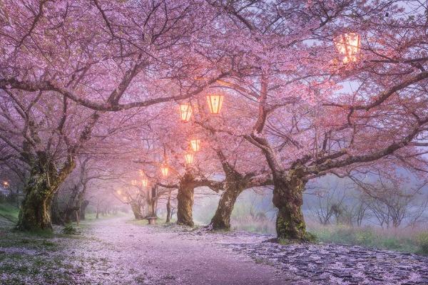 15 razones por las que visitar Japón