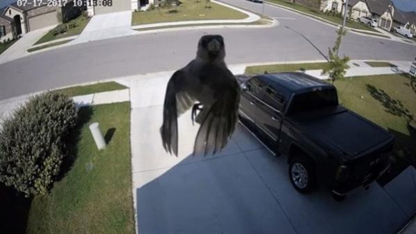 El misterioso pájaro que vuela sin mover las alas