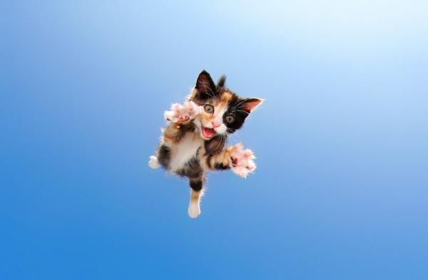 Seth Casteel fotografía a gatitos dando alocados saltos