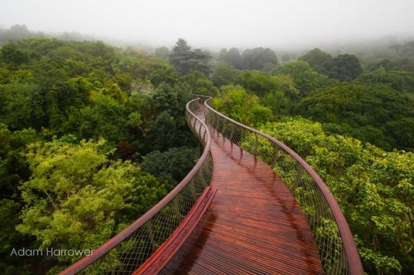 Pasaje aéreo de Ciudad del Cabo que cambia la forma de disfrutar del bosque