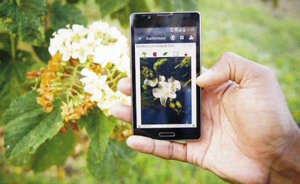 Una app permite identificar una planta sólo tomando una foto