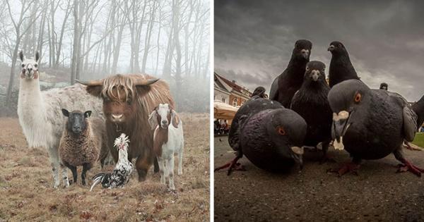Fotografías de animales que parecen estupendas portadas de disco