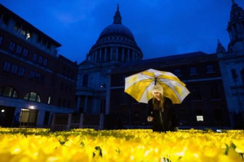 El Jardín de la Luz de Londres se cubre de 2000 narcisos iluminados por una preciosa causa